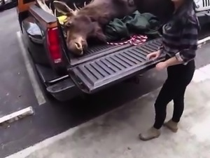 Julia ann big cock first time Lesbians Pawn Their Asses!